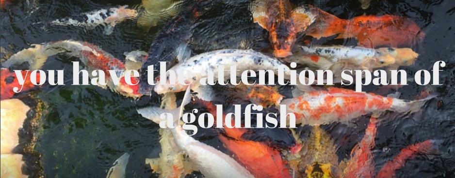 goldfishbrain.png